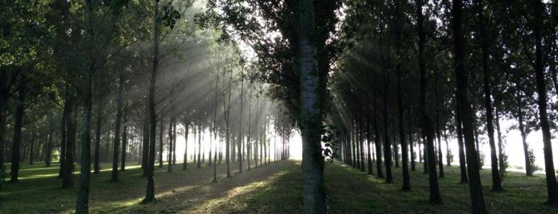Schaatsbaan Bomen Wandelroute Natuur  Hitland - Viteau Voel Je Goed