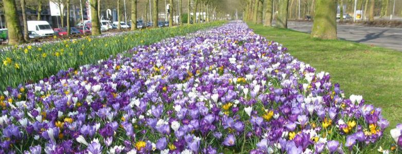 4 tekenen dat de lente eraan komt - Krokussen - Viteau Voel Je Goed
