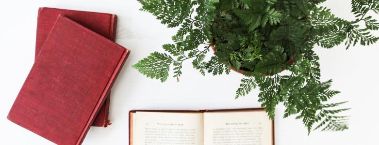 5 redenen voor echte planten op kantoor - Viteau Voel Je Goed