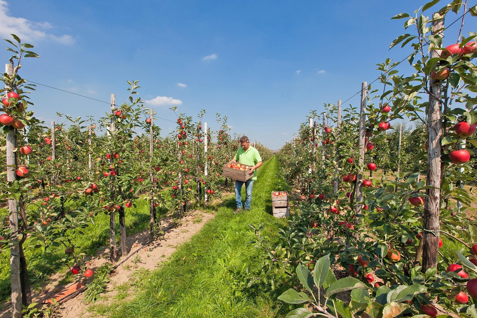 Fruit op je werk