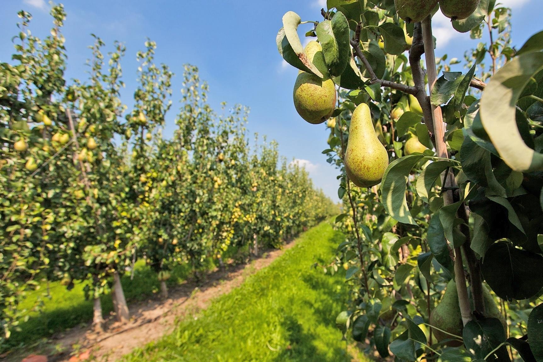 Fruit Op Kantoor : Fruitwater voor op kantoor het fruit bedrijfsfruit