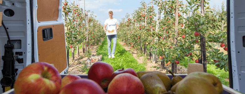 Nieuwe oogst: appels en peren