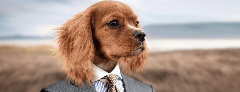 Puppycursus voor de mind